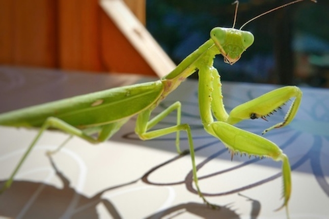 Praying Mantis threat group targeting US firms in sophisticated cyberattacks